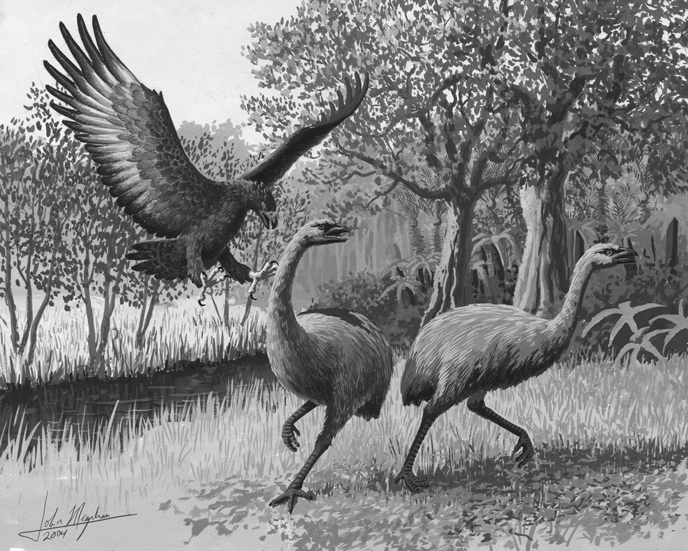 The Moa bird of New Zealand. (cfzaustralia.com)