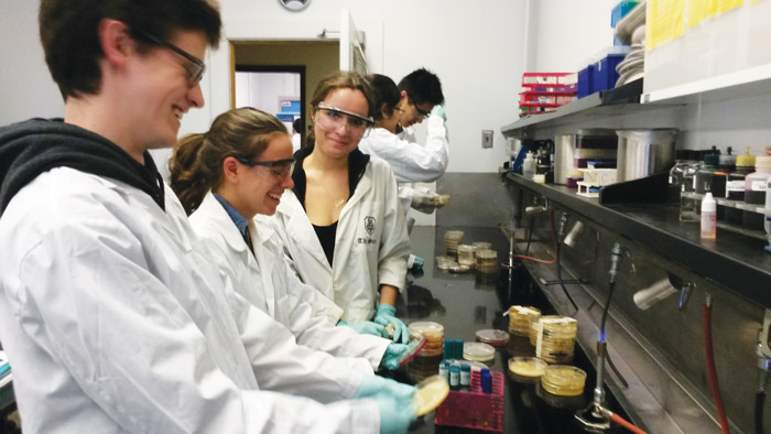 MIMM students working in the lab. (Photo courtesy of Samantha Gruenheid)