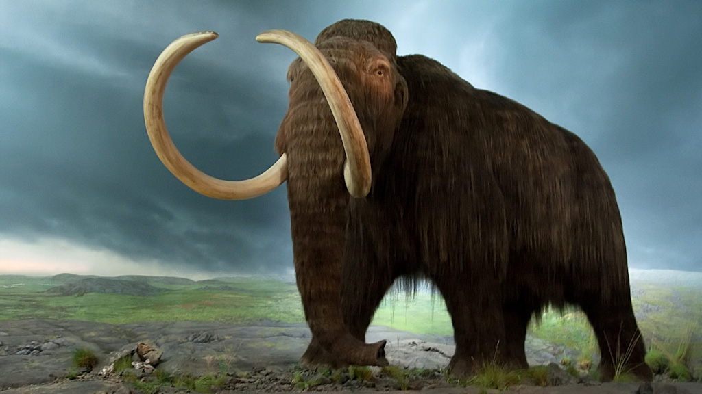 Mammoths played a crucial role in the spread of prehistoric wild gourds. (pbs.org)