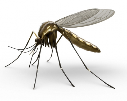 Cutting down the disease-carrying mosquito population could decrease the risk of malaria. (raid.ca)